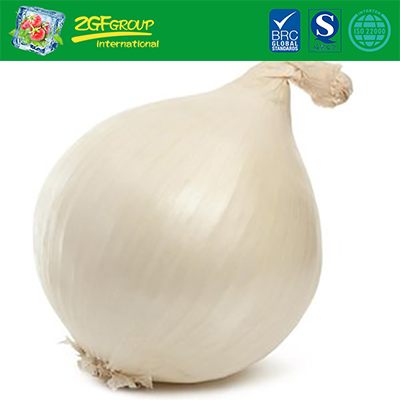 Fresh Onion With Cheap Price