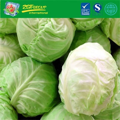 Grade A Fresh Cabbage For Sale