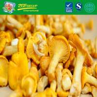 Frozen IQF Chanterelle From China