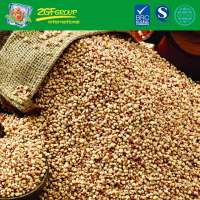 Sorghum From China