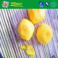 IQF Frozen Peeled Persimmon For Sale