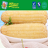Instant Whole Sweet Corn