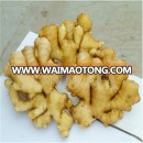 China high quality fresh ginger suppliers