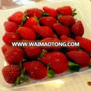 Fresh Top Quality Sweet Strawberries Now Available on 30% Discount Ready for Export