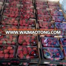 Competitive Fresh Strawberry for Exporting