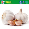 de hyderated garlic/garlic frozen