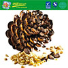 Hot Sale Pine Nuts China Pine Nuts For Sale